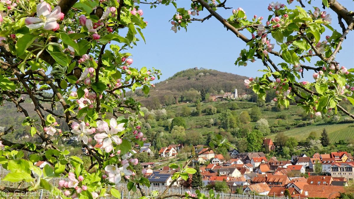 Madenburg Eschbach und Burg Landeck